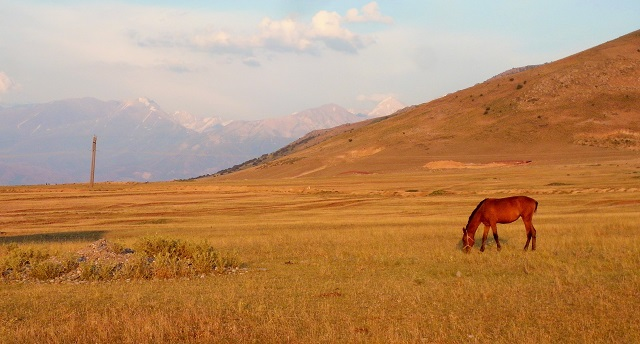 un caballo pasta en la estepa al atardecer. A lo lejos se ven las altas montañas de la reserva de Aksu-Zhabagyly, a la que nunca llegué a ir.